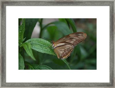 Framed Print featuring the photograph Butterfly On Leaf by Cathy Harper