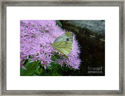 Butterfly On Mauve Flowers Framed Print