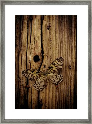 Butterfly On Old Wood Wall Framed Print