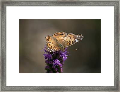 Framed Print featuring the photograph Butterfly In Solo by Cathy Harper