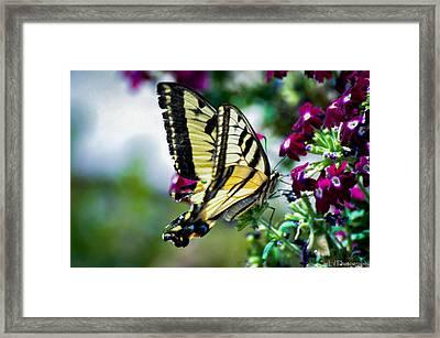 Butterfly On Purple Flowers Framed Print