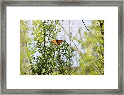 Butterfly On Schrub Framed Print by Thor Sigstedt