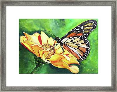 Butterfly On Yellow Daisy Framed Print by Silvia Philippsohn