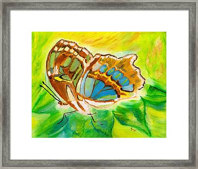 Malachite Butterfly Delight Framed Print by Meryl Goudey