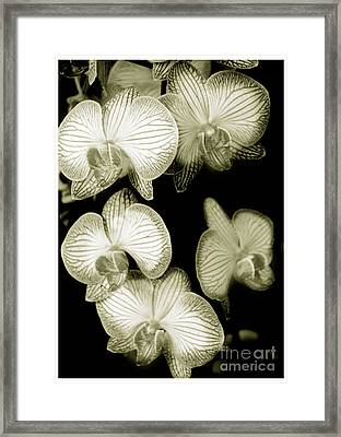 Butterfly-orchids Framed Print by Son Of the Moon