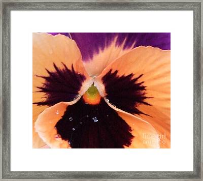 Butterfly Pansy Framed Print by Deborah Brewer