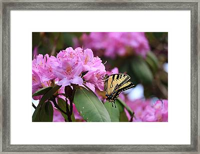 Butterfly Paradise Framed Print