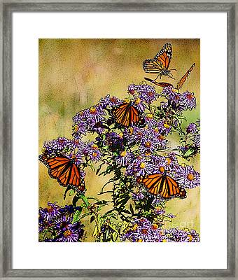 Butterfly Party Framed Print