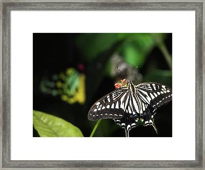 Butterfly Perfect Framed Print by JAMART Photography