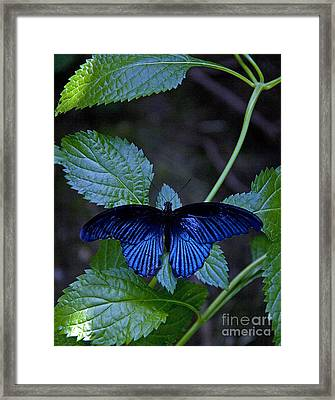Butterfly Place Framed Print