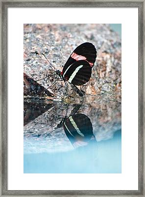 Butterfly Reflection Framed Print