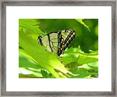 Butterfly Rest In The Leaves Framed Print by Debra     Vatalaro