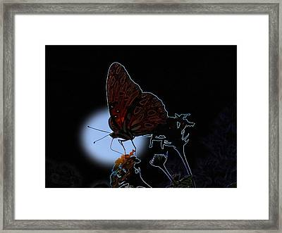 Butterfly Framed Print by Rick McKinney