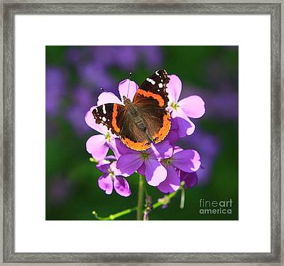 Butterfly Framed Print by Robert Pearson