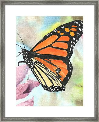 Butterfly Framed Print by Robert Thomaston