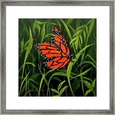 Butterfly Framed Print by Roseann Gilmore