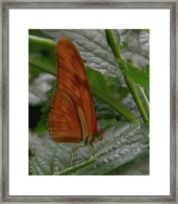Framed Print featuring the photograph Butterfly Smile by Manuela Constantin