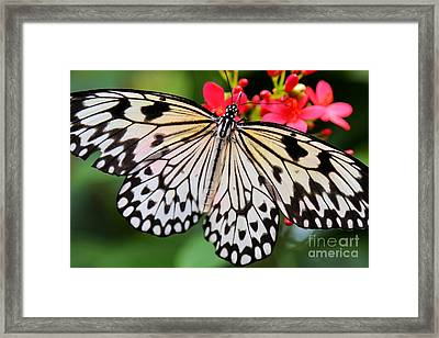 Butterfly Spectacular Framed Print