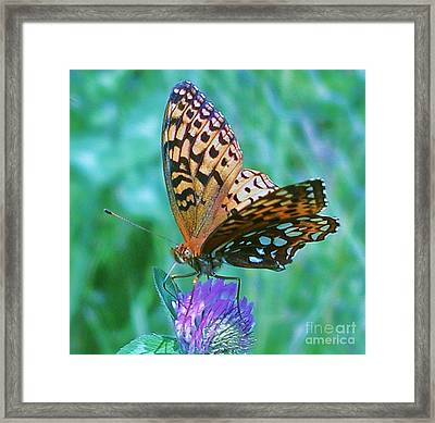 Butterfly Stare Framed Print by Emily Michaud