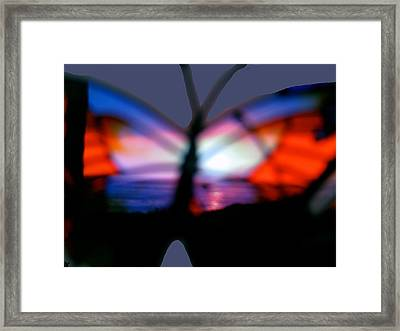 Butterfly Sunsets Collection  Framed Print by Debra     Vatalaro