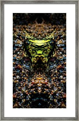 Butterfly Tiger Framed Print
