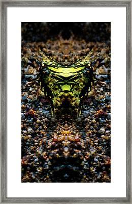 Butterfly Tiger Framed Print