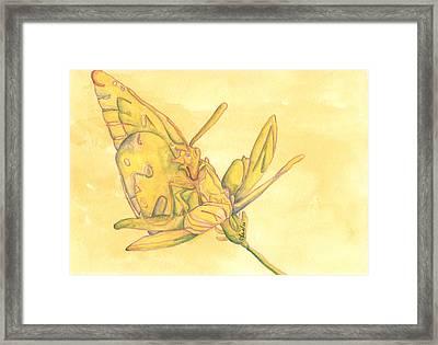 Butterfly  Framed Print by Versel Reid