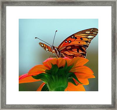 Butterfly View Framed Print by Dottie Dees