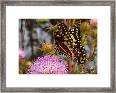 Butterfly Visit Framed Print by Tom Claud
