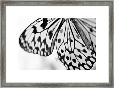Butterfly Wings 3 - Black And White Framed Print