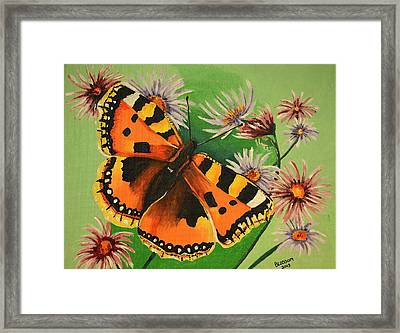 Butterfly With Asters Framed Print by Donna Blossom