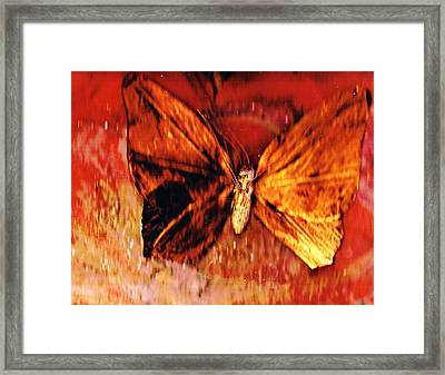 Butterfly With Dark Wing Framed Print by Anne-Elizabeth Whiteway