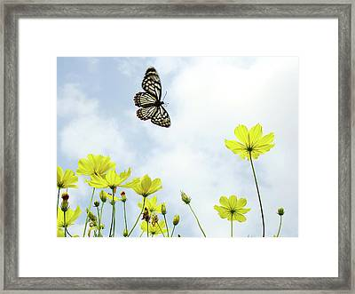 Butterfly With Flowers Framed Print by Adegsm