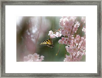 Butterfly With Misty Pink Framed Print by Molly Dean