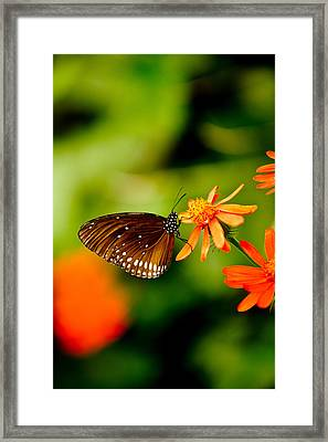 Butterfly With Orange Flowers Framed Print