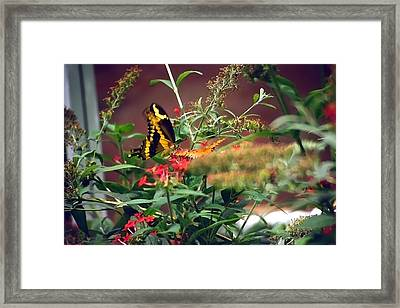Butterfly World Watercolor 2 Framed Print by Steve Ohlsen