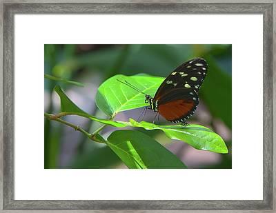 Butterfly1 Framed Print