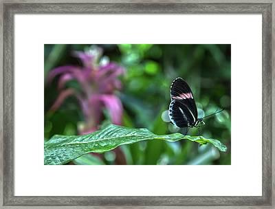 Butterfly3 Framed Print