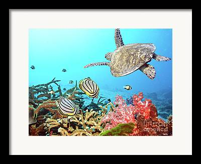 Asian Animals Framed Prints