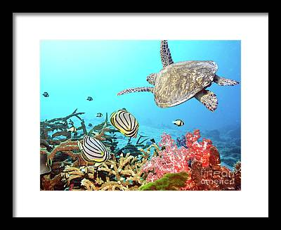 Zoology Framed Prints