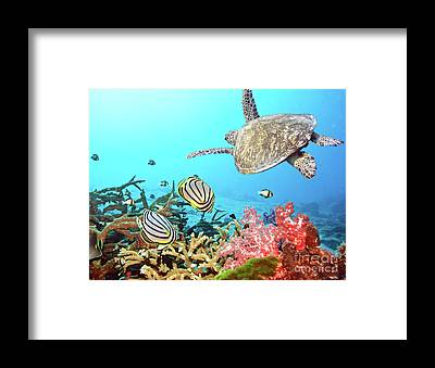 Angelfish Framed Prints