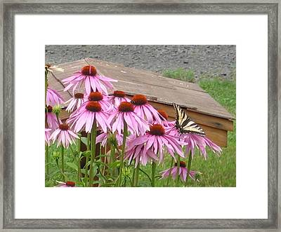 Butterfly's Lunch Framed Print by Barb Morton