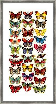 Butterflys Framed Print by Pg Reproductions