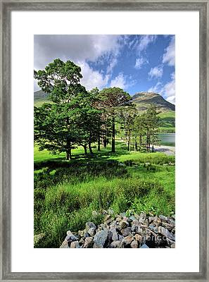 Buttermere Pines Framed Print by Nichola Denny