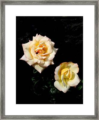 Framed Print featuring the photograph Buttermints by David Dunham