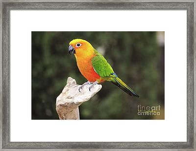 Butters Framed Print by DiDi Higginbotham