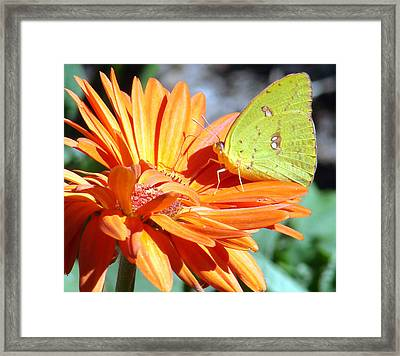 Butters Framed Print