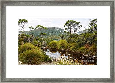 Button Grass At Dove Lake Framed Print by Lexa Harpell