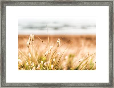 Button Grass Framed Print by Jonathan Williams