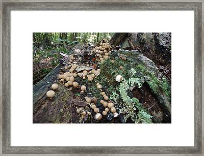 Button Mushrooms And Moss Framed Print